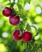 fruitful web