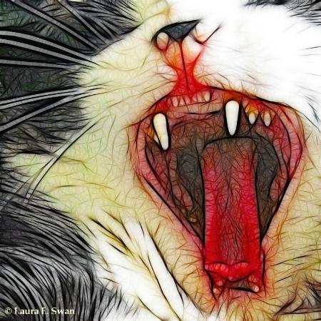 Ferocious Feline