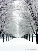 Winter's Way
