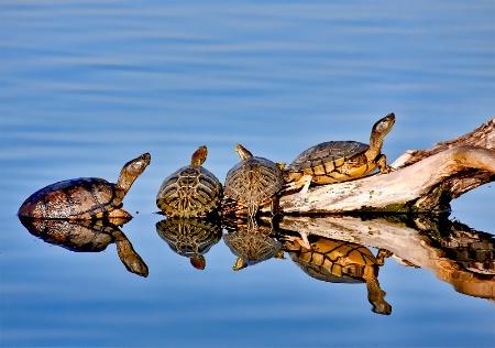 Turtle Hangout