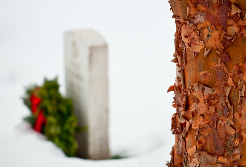 Peeling bark and a final resting place