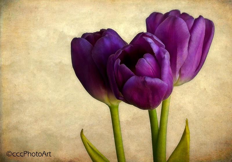 Triple Purple Perfection