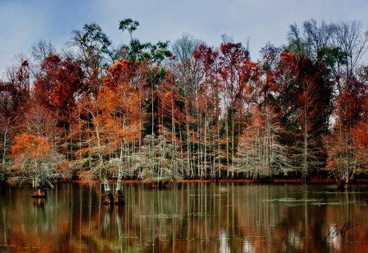 A Cypress Lake