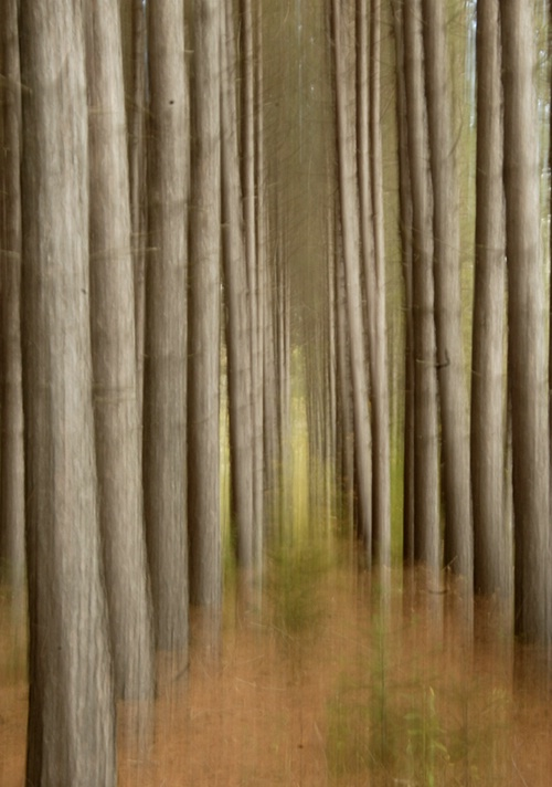Into The Woods - ID: 9685469 © Joseph Cagliuso