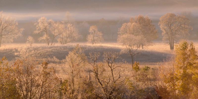 Fogline & Trees - ID: 9685475 © Joseph Cagliuso