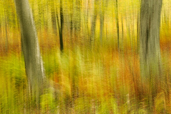 Trees in Forest Abstract - ID: 9685481 © Joseph Cagliuso