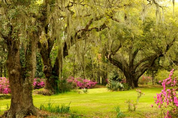 Moss Draped Trees in Garden - ID: 9685485 © Joseph Cagliuso