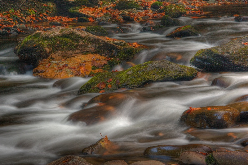 Mountain Stream and Fallen Leaves - ID: 9685695 © Robert A. Burns