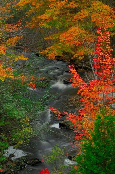 Tranquil Autumn Scene - ID: 9688237 © Joseph Cagliuso