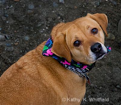 Dog Park 7  - ID: 9690008 © Kathy K. Whitfield