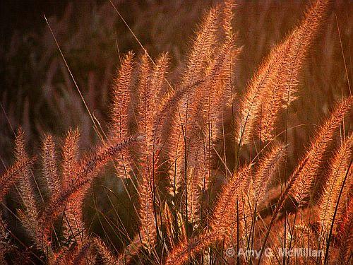 Sun Catchers - ID: 9699602 © Amy G. McMillan