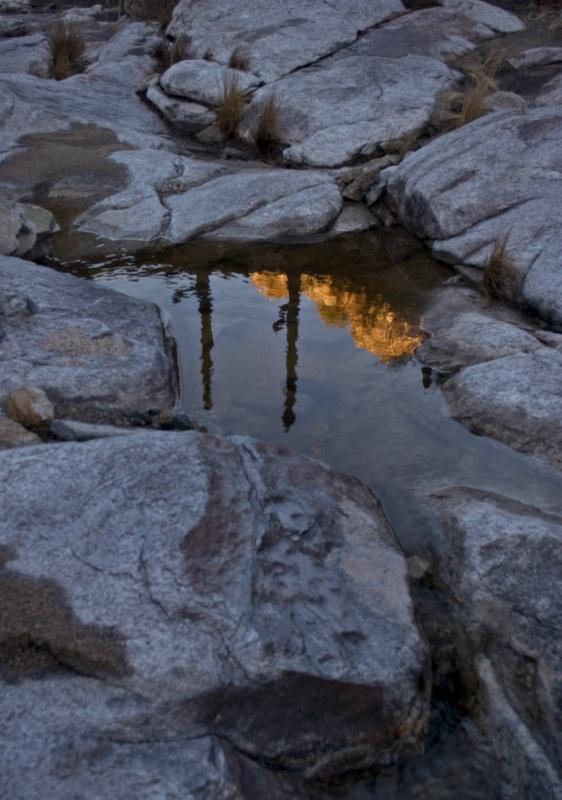 At Dawn - ID: 9709722 © Patricia A. Casey
