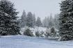 Tree Line Frost