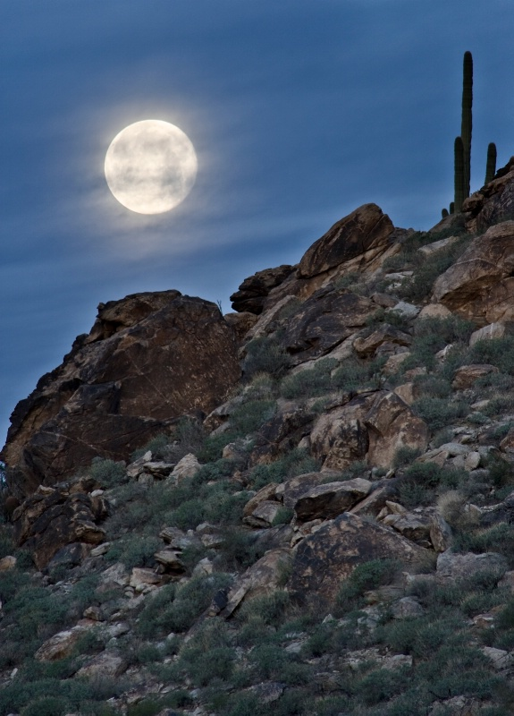 Saguaro to the Moon Jan 31st - ID: 9747194 © Patricia A. Casey