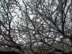 Flakes tree