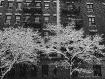 Snow Flakes New Y...