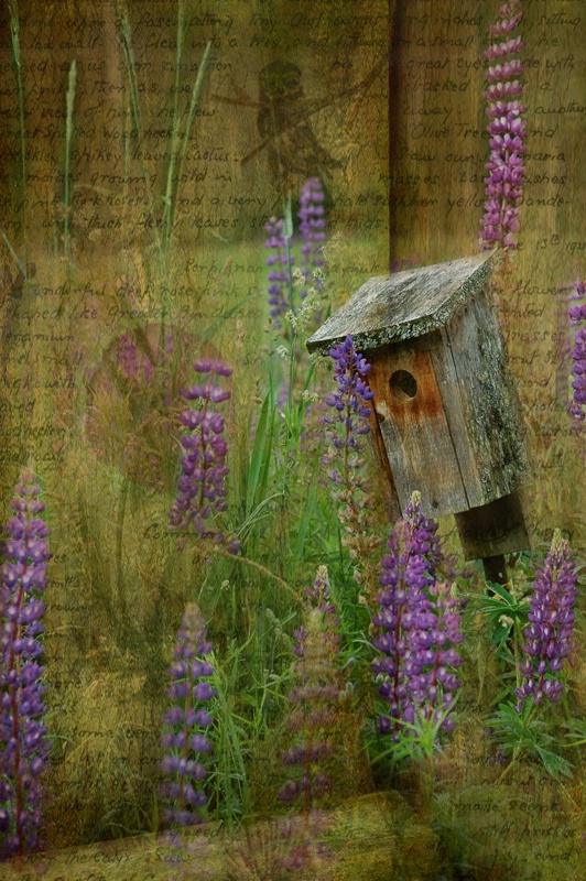 Lupines and Birds in Vermont