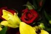 Rose Among Lilies