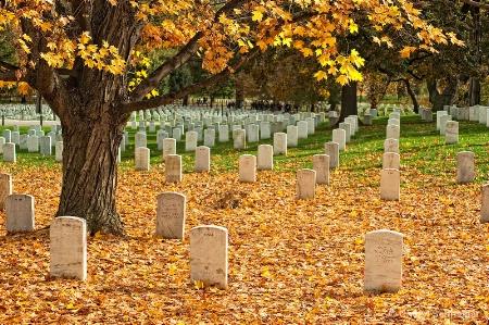 Arlington Cemetery V