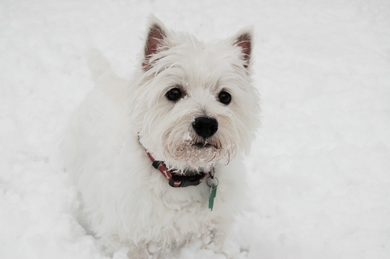 Cold Nose, Warm Heart