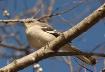 Bird of Many Song...