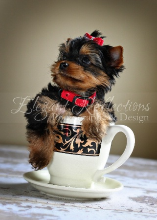 ~Pup In Cup~