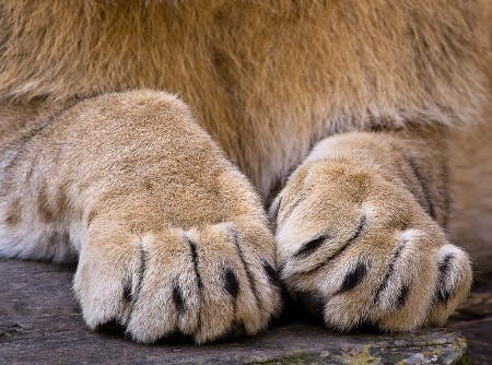 Paws-Abilities
