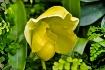 NewBorn Orchid