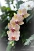 Orchid Falls