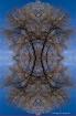 Dreamcatcher Tree