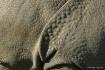 Rhino details