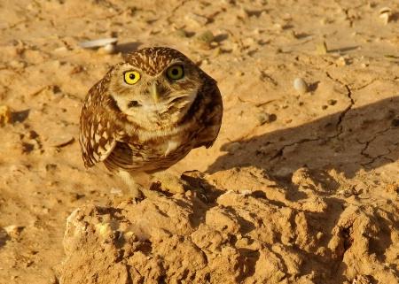 Owl Eyes!