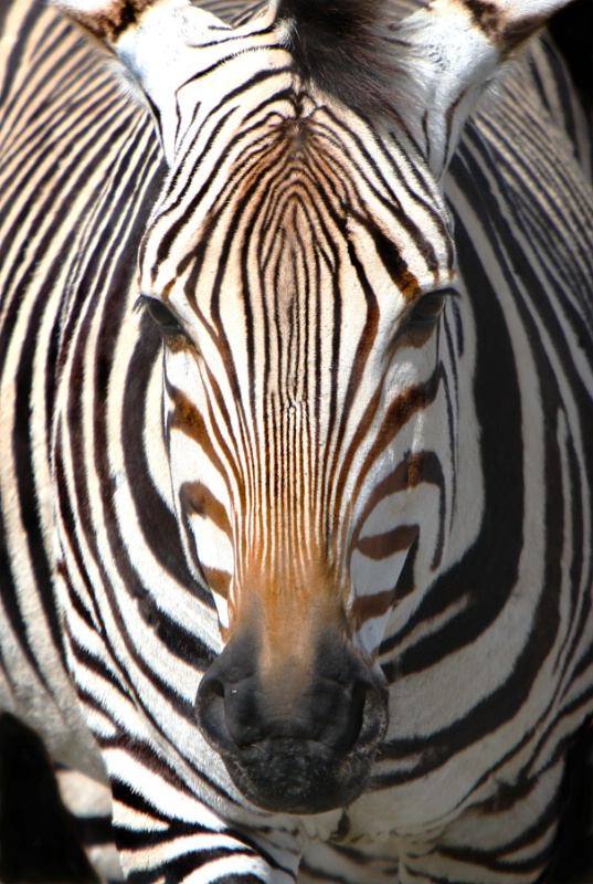 """Striped""  - ID: 9862761 © John Singleton"