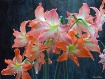 Floral Dedication
