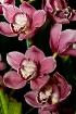 Orchid Arangement