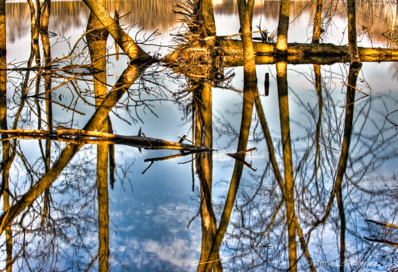 Tree Reflections: HM-Landscapes, Images of Nature