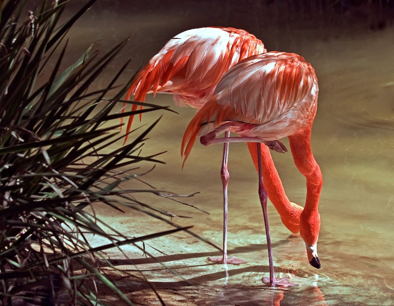 Fellow Flamingos - ID: 9897199 © Joseph T. Pilonero