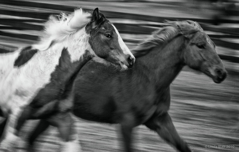 Black and White Motion