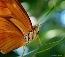 Insect Magnificence