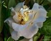 Spring Bee (SHS)