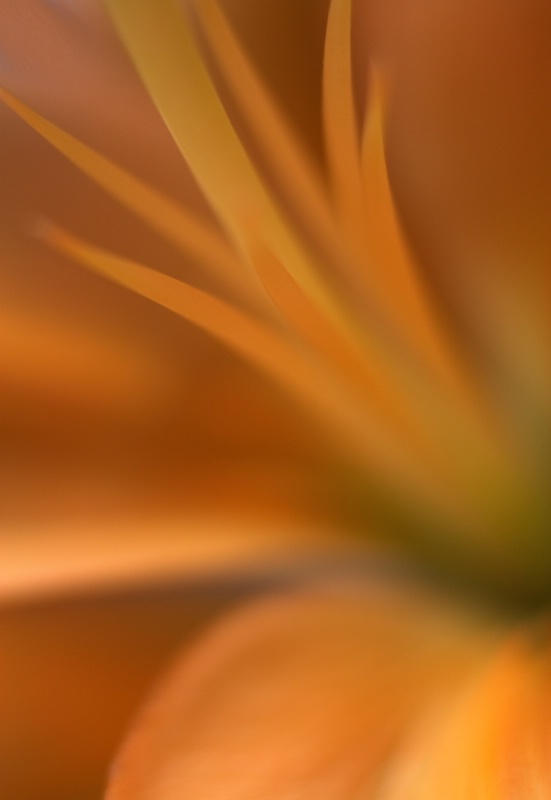 Inside Of A Lily