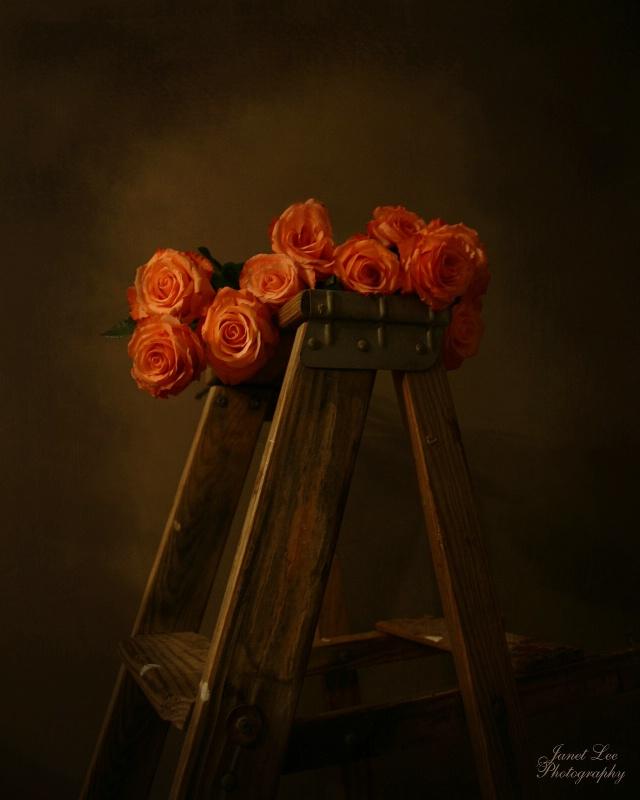 Renaissance Roses