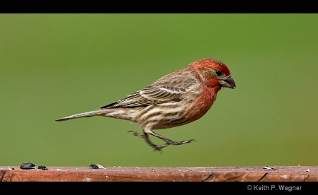 the-finch-hop