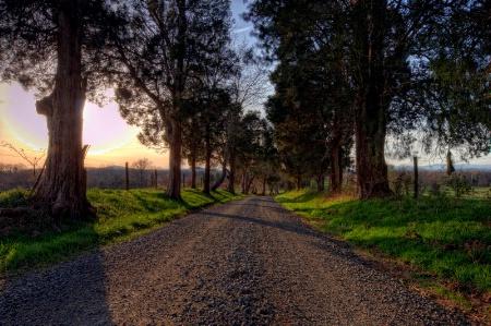 Virginia Cedars at Sunset