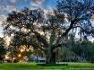 Magnolia Gardens ...