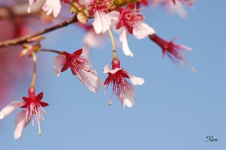 Delightful Spring