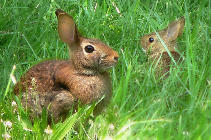 Mama & Baby Hare