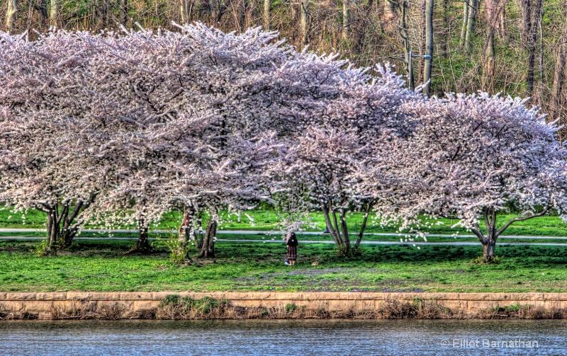 Philadelphia in Spring 7 - ID: 9975507 © Elliot S. Barnathan