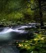 Smoky Mountains S...