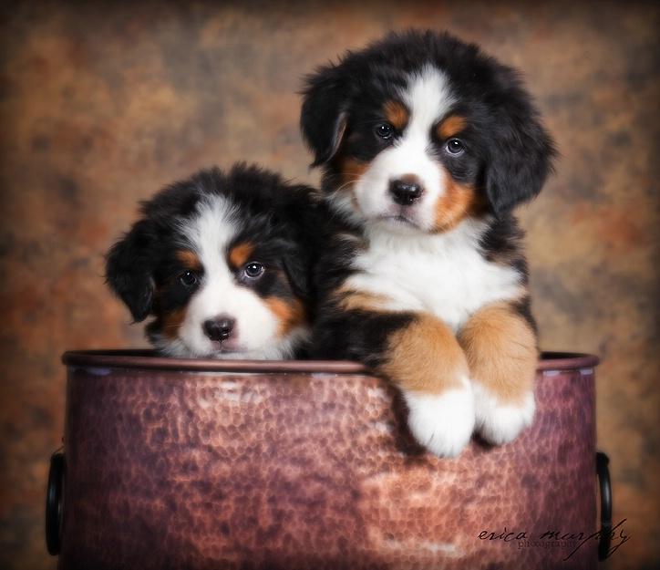Pot of Pups